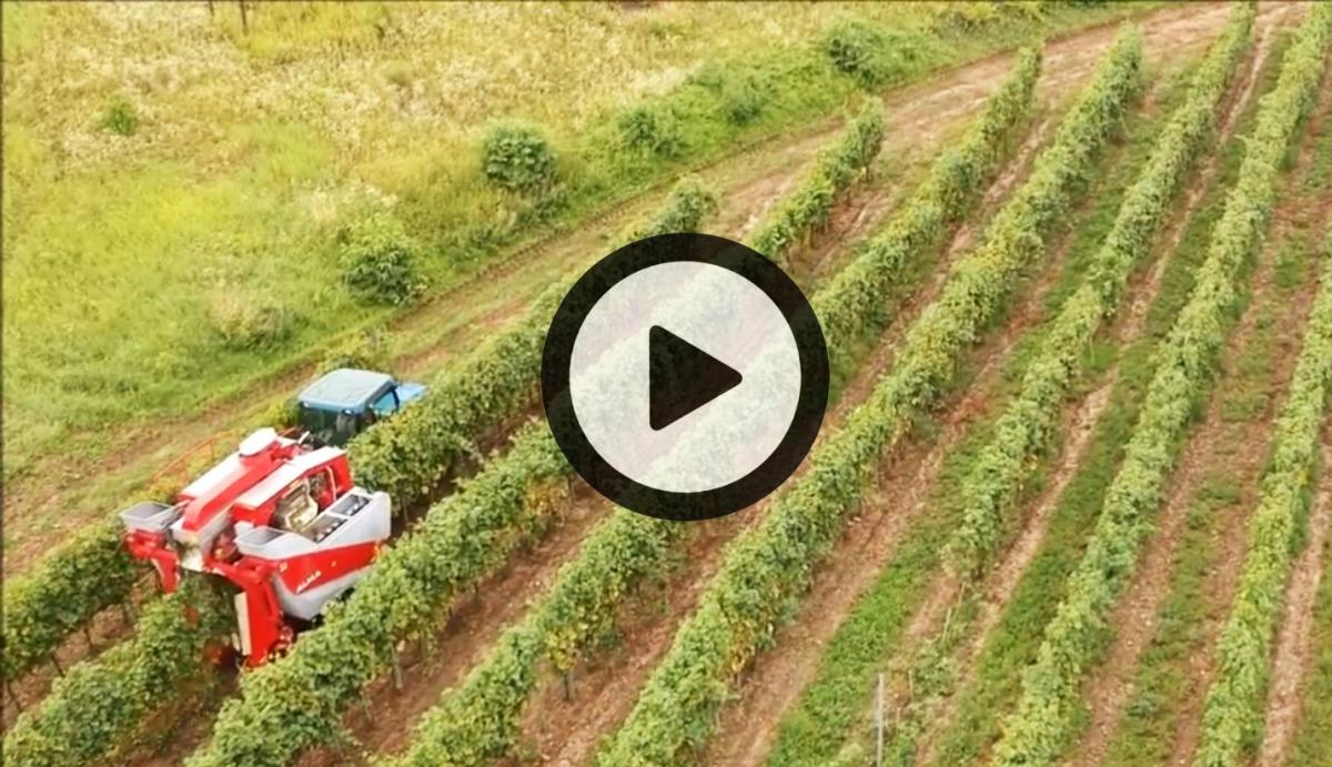 Vidéo Drone Hongrie 2018 (©alma-france.com 2018)