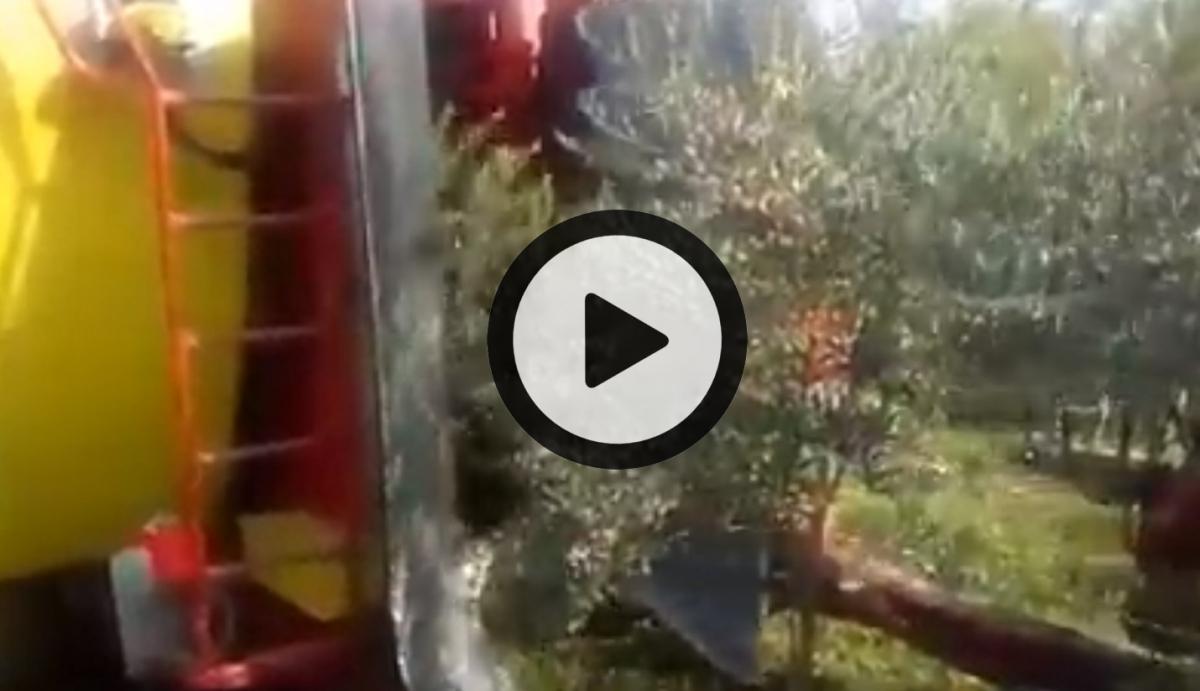 Vidéos récolte Olive (©alma-france.com 2018)